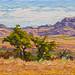 Grasslands by RobM333
