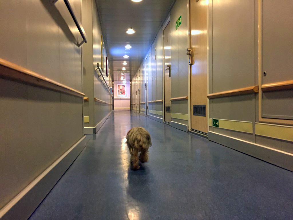 Viajar con mascotas a Reino Unido: Pau paseando por el barco viajar con mascotas a reino unido - 23032313323 d34d981490 b - Viajar con mascotas a Reino Unido desde España