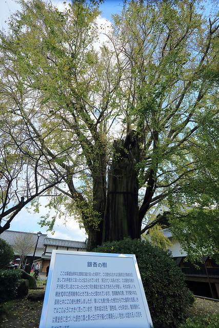 D3_熊本城20