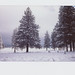 The Pines by alvey_ski
