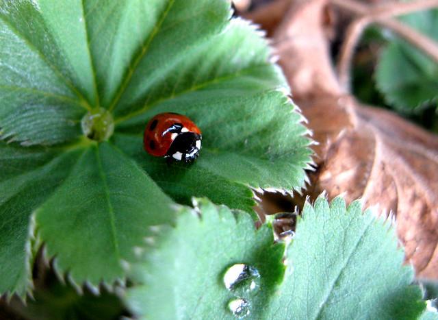 Ladybug, Canon POWERSHOT A1000 IS