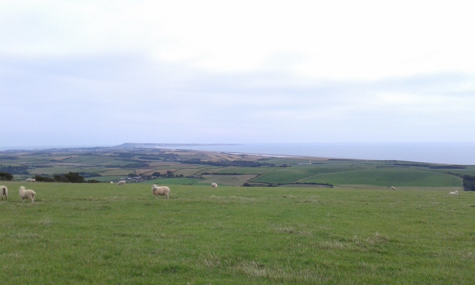 20150816_143835 Portland view from South Dorset Ridgeway
