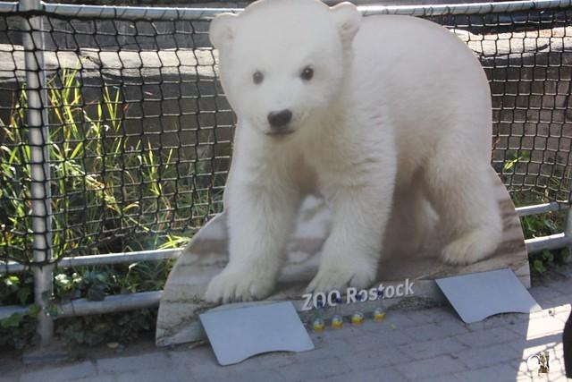Zoo Rostock 19.09.20151