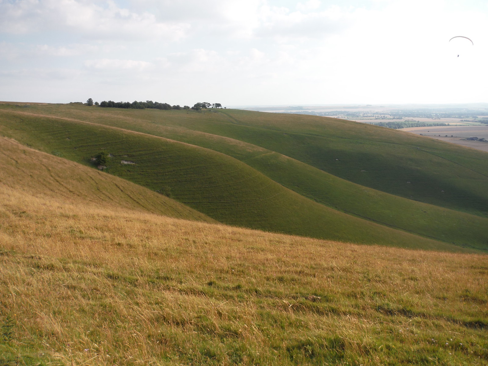 Milk Hill, serrated Down SWC Walk 127 Pewsey Circular