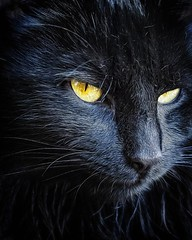 El Rey Shampú 🐱 #cat #cats  #catsagram #love #catstagram #instagood #kitten #kitty #kittens #pet #pets #animal #animals #petstagram #petsagram #photooftheday #catsofinstagram #ilovemycat #instagramcats #nature #catoftheday #lovecats #furry #sleeping #