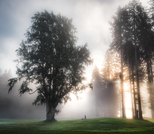 california ca morning usa sun mist tree nature cali fog america sunrise work golf landscape haze sonoma earlymorning zen greens golfcourse lawnmower sunburst worker sonomacounty serene redwood guerneville pachamama chore puttinggreen monterio northwoodgolfcourse northwoodgolfclub