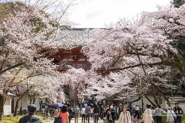 0402D8京都醍醐寺-1160342