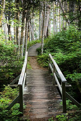 wood bridge canada forest newfoundland wooden trail boardwalk np footpath spruce borealforest newmansound terranovanationalpark wyojones plantsfoliage