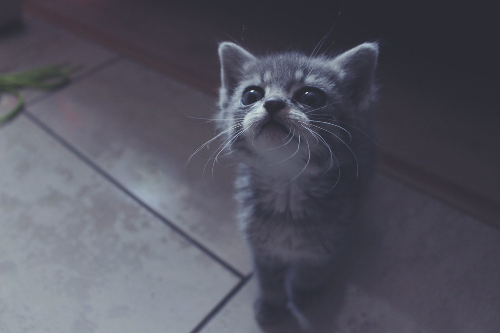 Are you gonna play with me ?