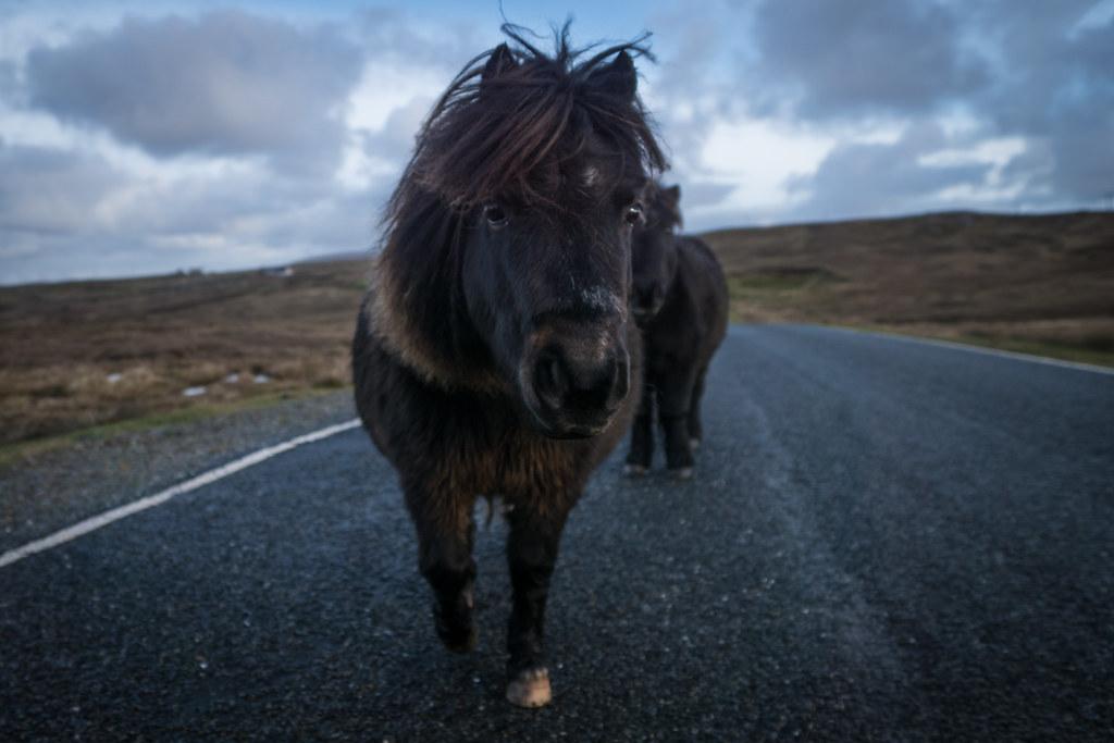 Shetland-14
