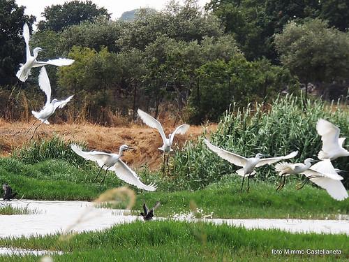 oasi naturale gioia del colle