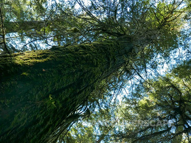 Tofino/Raincoast Forest Trail
