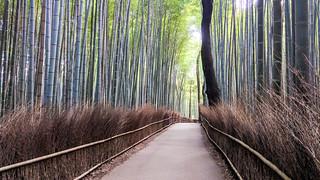 Image of Arashiyama Bamboo Grove. kyōtoshi kyōtofu japan jp