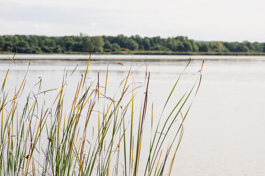 Réserve naturelle de l'étang des Landes - écotourisme Creuse - carnet de voyage France
