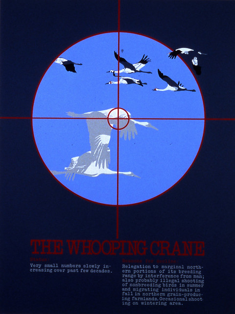 4_TGW_Paul-Campbell_The-Whooping-Crane-1977