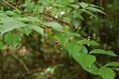 Snaps from Shenduruney wildlife sanctuary, Thenmala