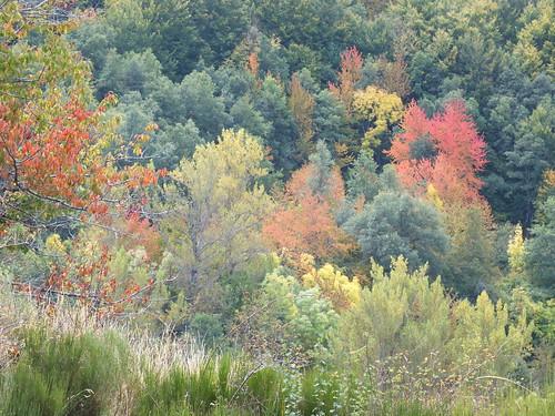 Bosques de Caminayo