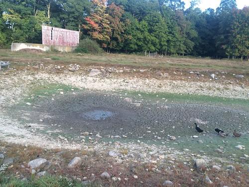 Nearly Dry Pond