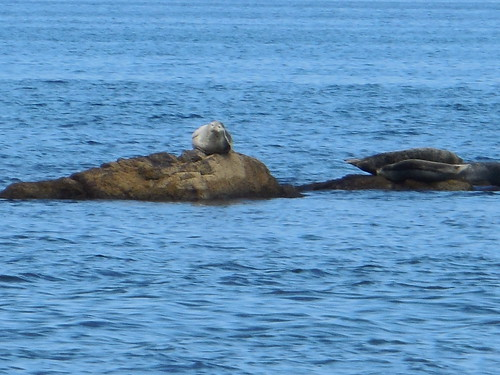 rebun-island-seals-watching-seals01