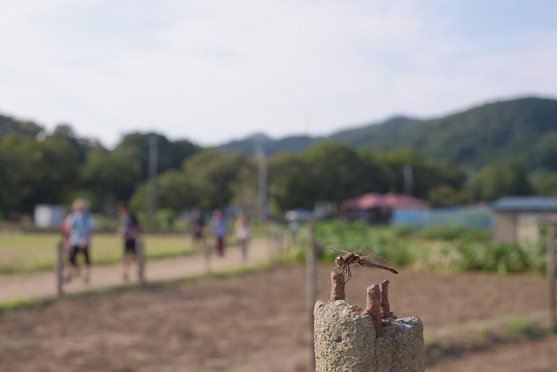赤とんぼのいる風景 landscape with red dragonfly