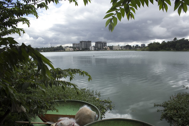 Molded fishing boats straddle a bountiful lake as new residential developments herald high-rise living into Bangalore's peri-urban areas. Treated wastewater from most of these high rises will end up in the lake.