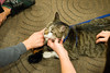 animal-therapy-1040103