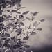 Winter Azalea (1 of 1) by amndcook