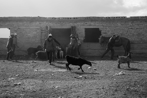 asia asie asiecentrale asian centralasia kirghizstan kirghizistan songkol songkool nb noiretblanc bw blackandwhyte reportage documentary documentaire photojournalisme photoreportage photojournalism mafate69 sheperd berger sheep mouton