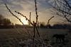 Winter dog walk, Merstham