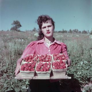 Female strawberry picker on the Saint John River Valley farm of Jepson London, Evandale, New Brunswick / Une cueilleuse de fraises sur la ferme de Jepson London, dans la vallée du fleuve Saint-Jean, Evandale (Nouveau-Brunswick)