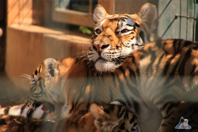 Tierpark Berlin 30.08.2015  0109