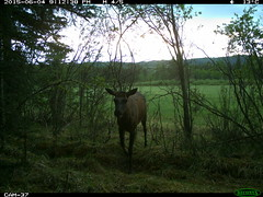 Elk 1 - Wildlife Blind
