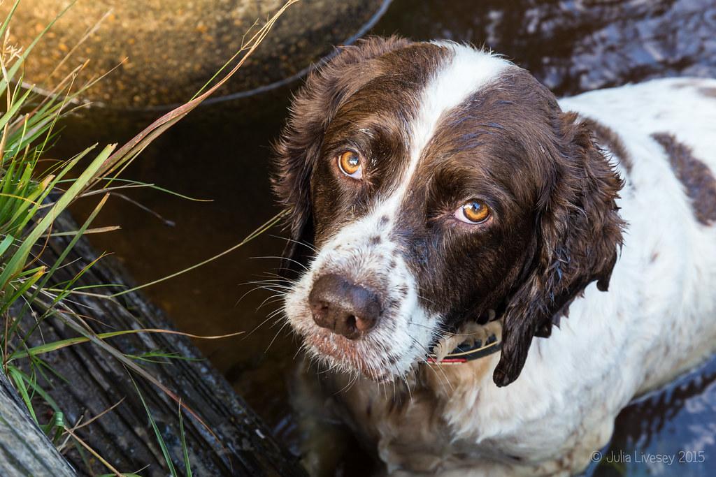 Max in the Gruffalo Pool