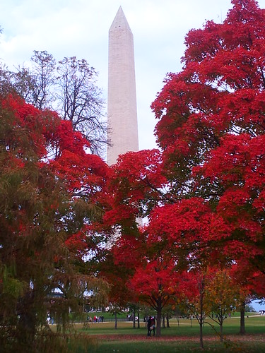 Maples on the Mall