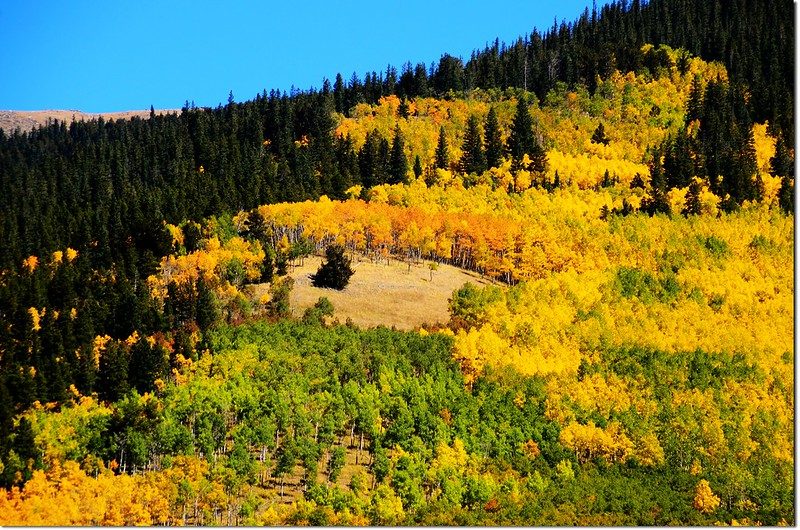 Fall colors at Kenosha Pass, Colorado (35)