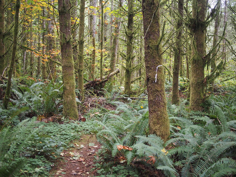 Lost in the Woods: I ended up wandering in the woods for a total of two hours trying to find my way to the highway.  I knew where the highway was, but the hiking trails didn't follow straight lines.