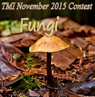 TMI Fungi