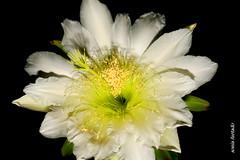 Flores - Flowers 2