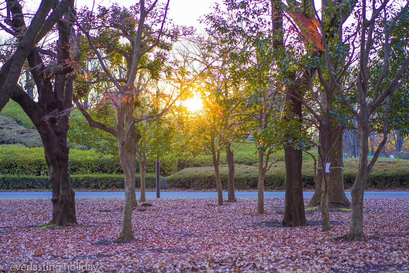 小金井公園 Koganei Park-0017