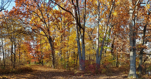 oak forest near nankin lake westland michigan