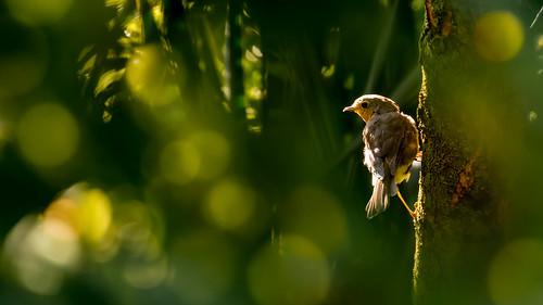 Sunny Bird