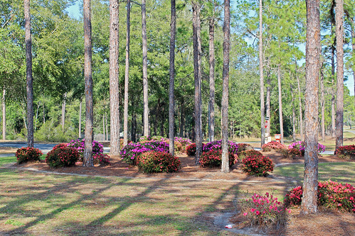 landscape median trees pinetrees shrubs azaleas flowers blooms citrussprings florida
