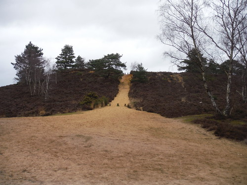 Northerly Path from Lion's Mouth Junction, Hankley Common
