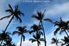 palm trees - paradise by Aaron Lynton