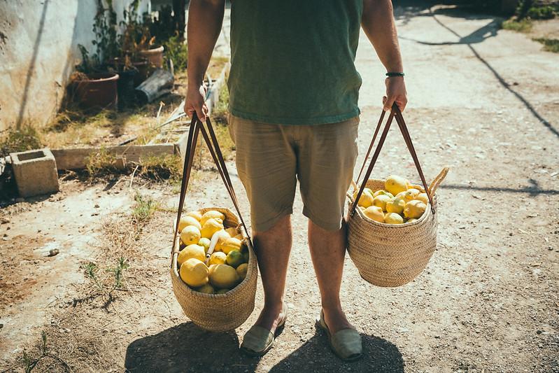 gin-eva-recogida-naranjas-baja-48