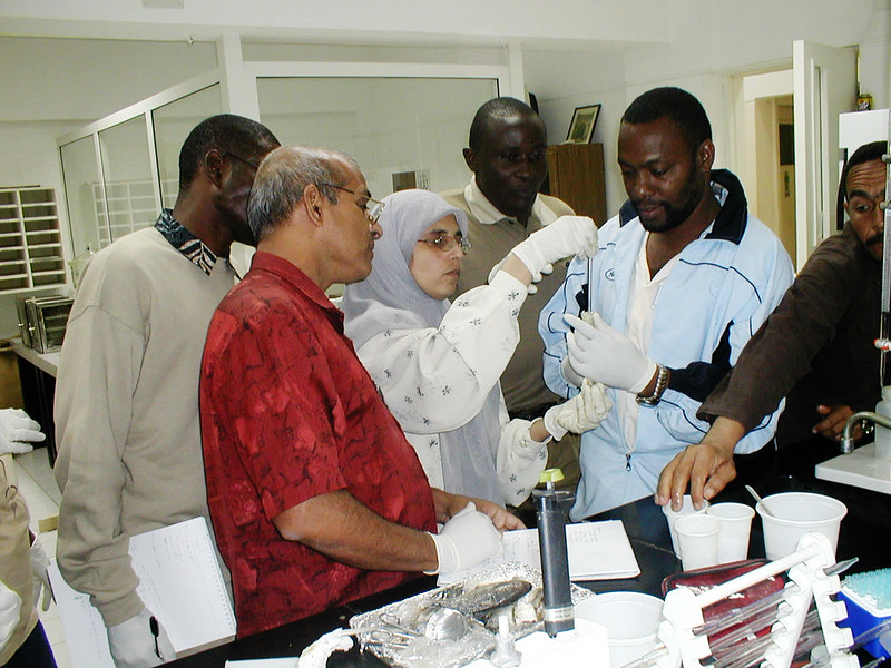 African trainees participating in training session on genetics techniques at Abbassa Research Center, Egypt. Photo by Gamal El Naggar.