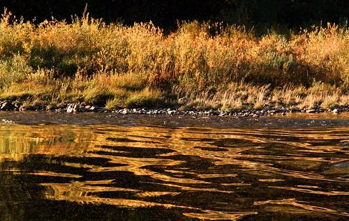 autumn light sunset sunlight reflection fall yellow river landscape gold outdoor britishcolumbia shoreline beautifullight autumncolours shore stmarylake riverbank eveninglight stmaryriver eastkootenay
