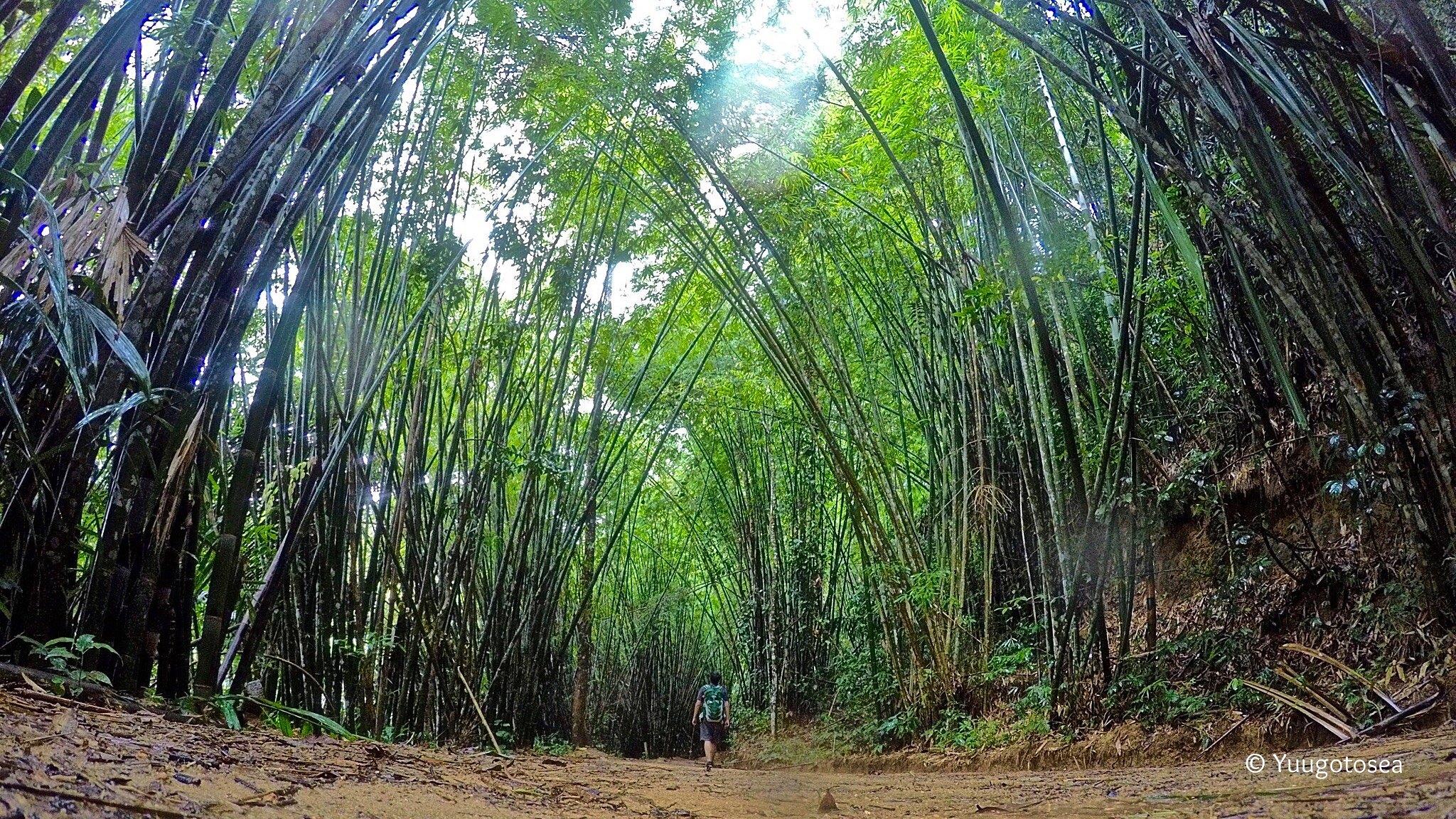 backpacking-thailand---suratthani---hatyai---penang---kuala-lumpur-2015