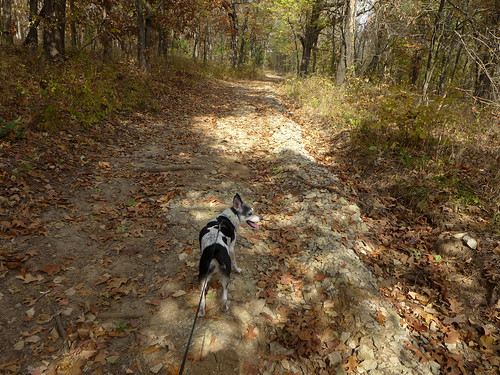 2015-10-22 - Walking at Smith's Fork Park - 0014 [flickr]