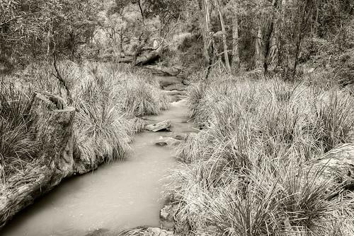 trees water creek forest landscape stream gums queensland eucalypts gumtrees mainrangenationalpark watergrasses nikond800 nikon160350mmf40
